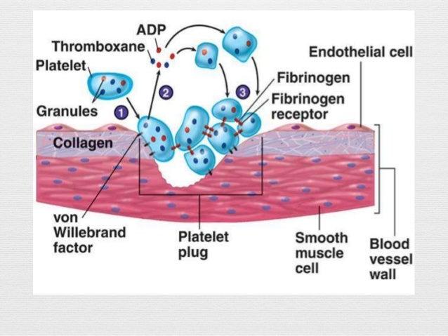 Factores de coagulacion dependientes de vitamina k