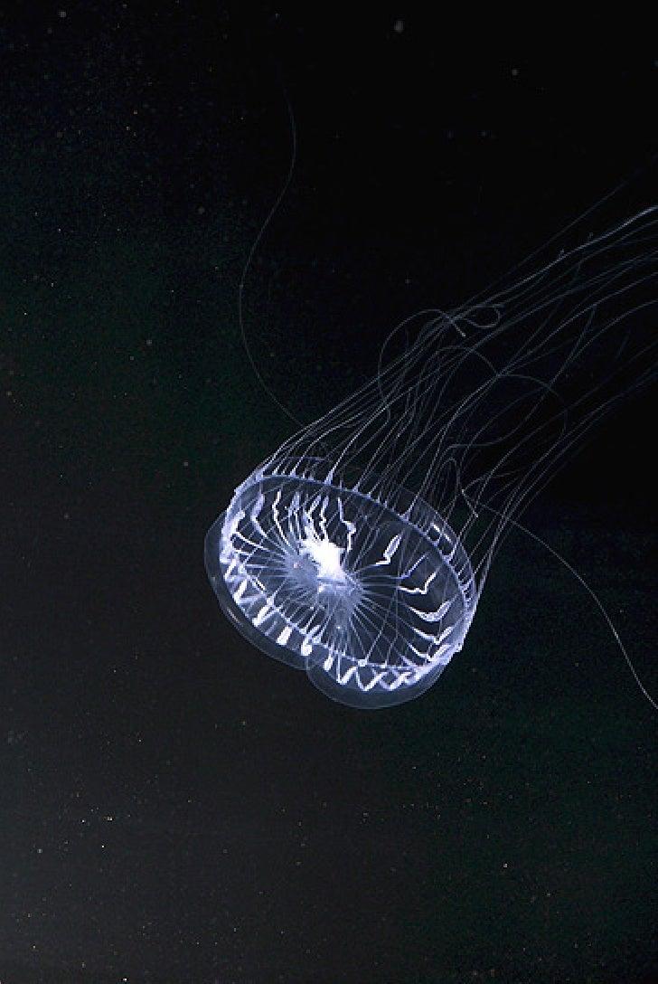 Nuevas especies Mar Asia