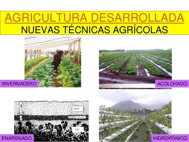Nuevas t cnicas agr colas for Tecnicas de coccion modernas