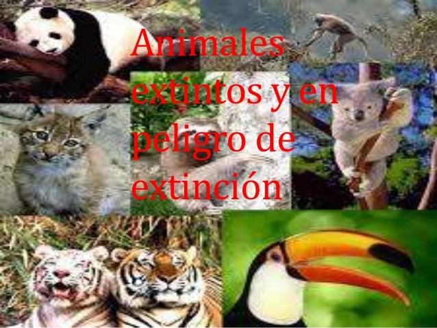 Animales extintos y en peligro de extinción