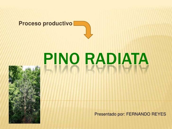 Proceso productivo        PINO RADIATA                     Presentado por: FERNANDO REYES