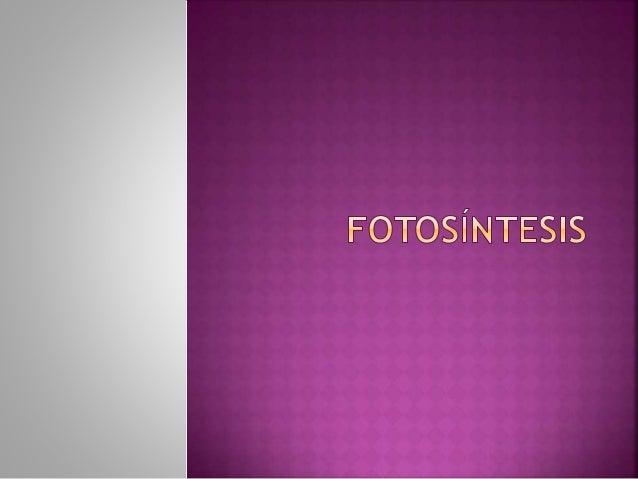 Fotosíntesis (nombre femenino) Proceso químico que tiene lugar en las plantas con clorofila y que permite, gracias a la en...