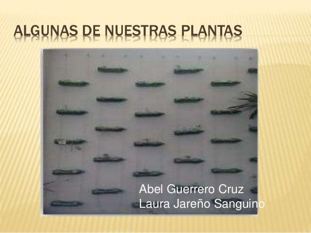 ALGUNAS DE NUESTRAS PLANTAS Abel Guerrero Cruz Laura Jareño Sanguino