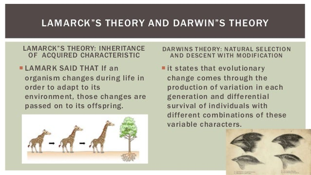 Darwins Descent By Modification Vs Natural Selection