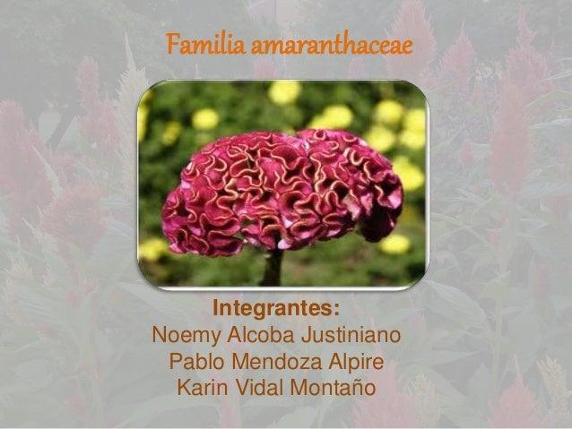 Familia amaranthaceae Integrantes: Noemy Alcoba Justiniano Pablo Mendoza Alpire Karin Vidal Montaño