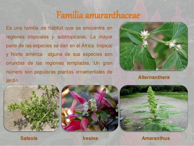 presentaciones de botanica Slide 3