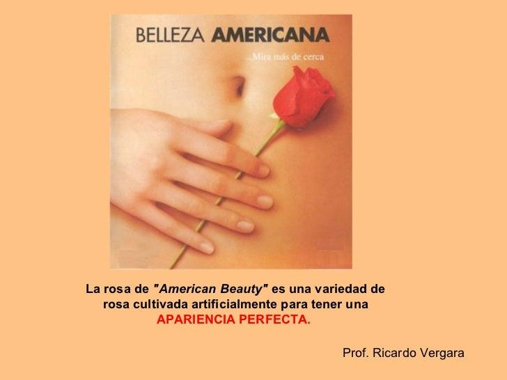 """Larosade """"American Beauty"""" es una variedad de rosa cultivada artificialmente para tener una  APARIENCIA PERF..."""