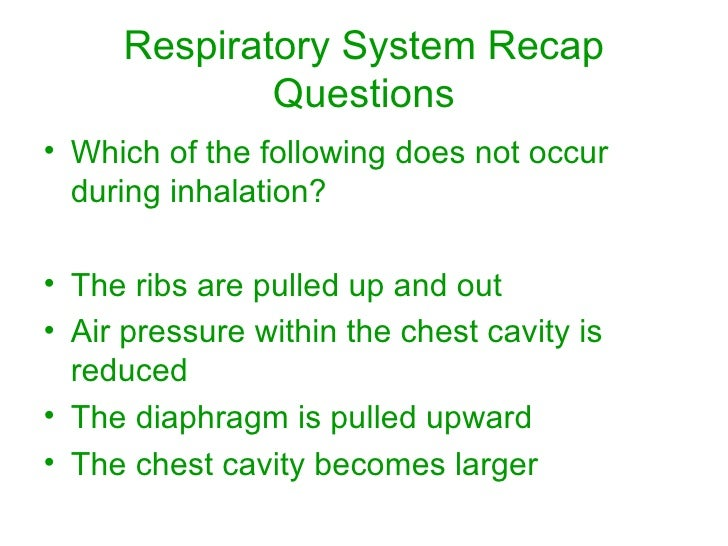 questions on the respiratory system Go inside the human body and see first-hand how the respiratory system works vivid animation and real-life examples demonstrate the respiration process.