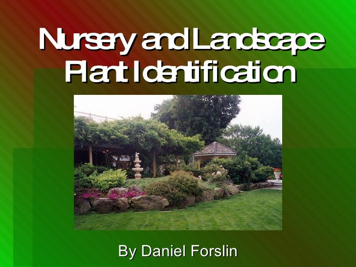 Nursery and Landscape Plant Identification By Daniel Forslin