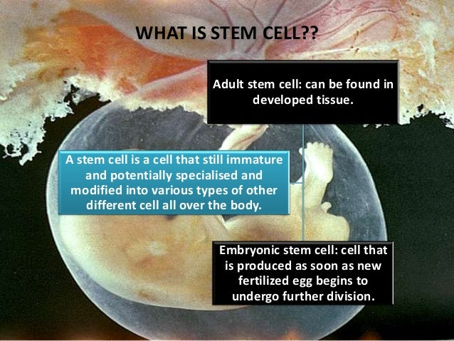 should stem cell research be banned Or ban stem cell research may have a significant impact on the lives and welfare of thousands, if not millions, of people the reason the debate between advocates and opponents of stem cell.