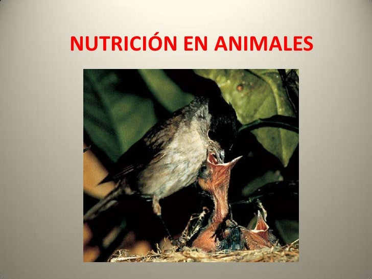 NUTRICIÓN EN ANIMALES