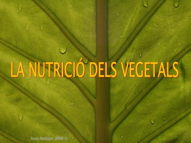 LA NUTRICIÓ DELS VEGETALS