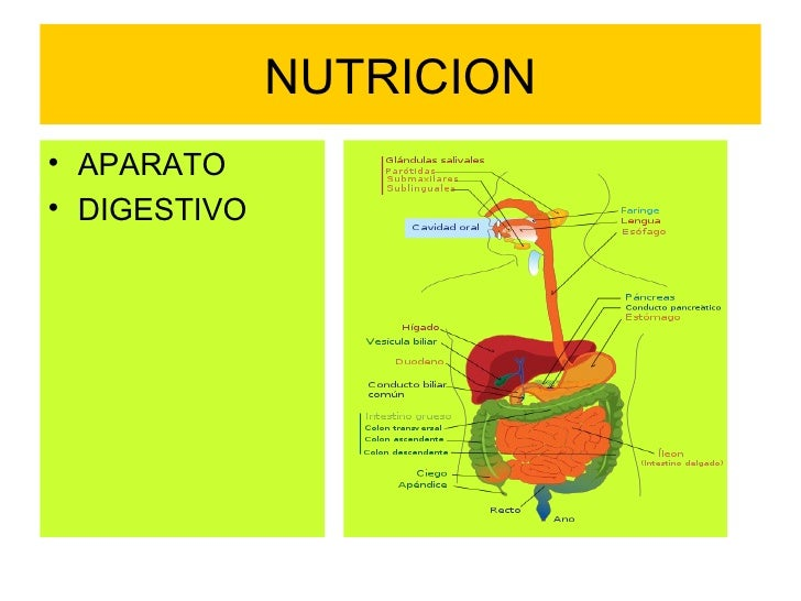 NUTRICION <ul><li>APARATO </li></ul><ul><li>DIGESTIVO </li></ul>