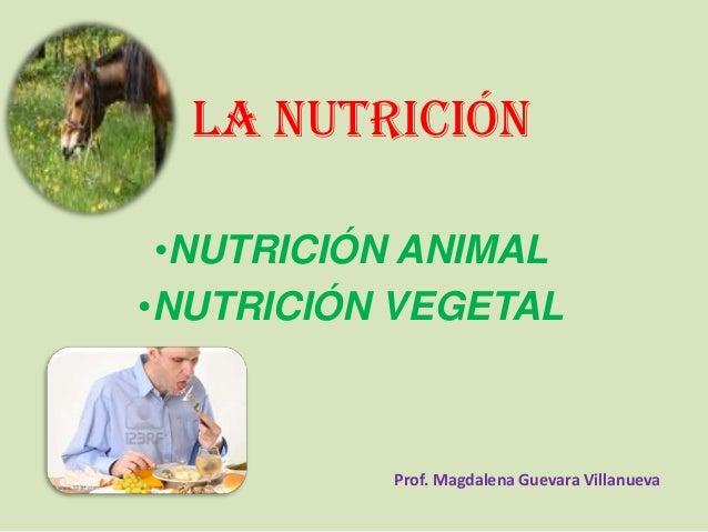LA NUTRICIÓN •NUTRICIÓN ANIMAL •NUTRICIÓN VEGETAL Prof. Magdalena Guevara Villanueva