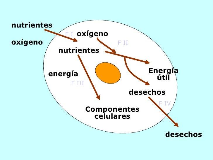 calculadora de metabolismo basal para Dummies