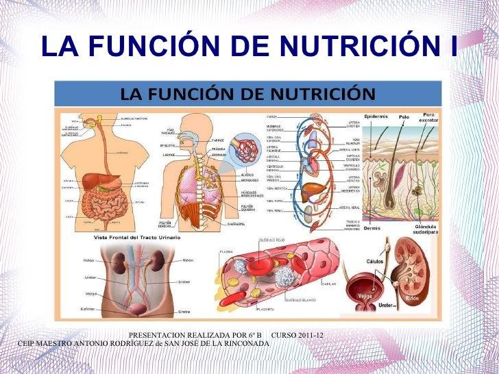 LA FUNCIÓN DE NUTRICIÓN I PRESENTACION REALIZADA POR 6º B  CURSO 2011-12 CEIP MAESTRO ANTONIO RODRÍGUEZ de SAN JOSÉ DE LA ...