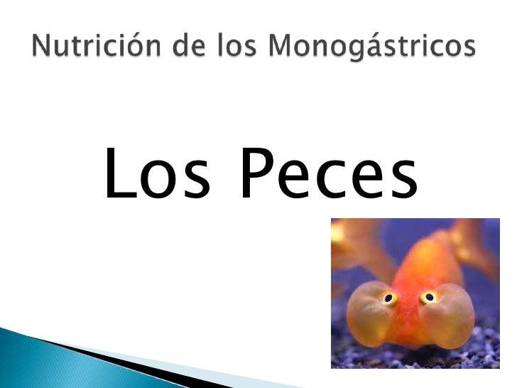Nutricion de los peces for Peces alimentacion