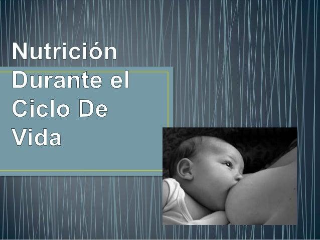 Nutricion durante el ciclo de vida Slide 2