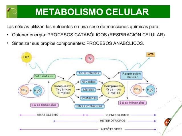 Ayuda con metabolismo de las lipoproteinas