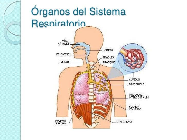 Nutricion Y Respiracion. Primera Parte