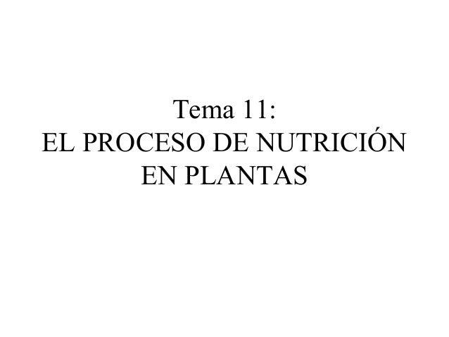Tema 11: EL PROCESO DE NUTRICIÓN EN PLANTAS
