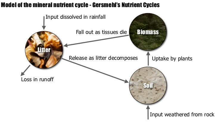 Ib geography ecosystems nutrient cycling 19 ccuart Image collections
