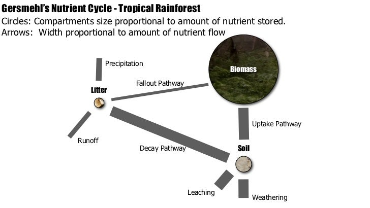 IB Geography Ecosystems Nutrient Cycling – Nutrient Cycle Worksheet