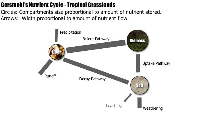 Ib geography ecosystems nutrient cycling gersmehls ccuart Image collections