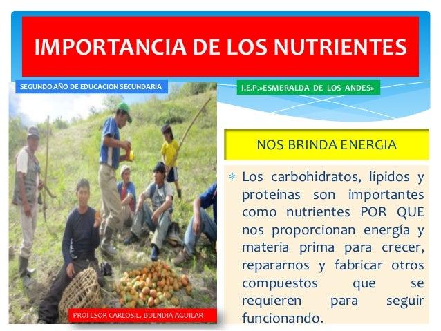 Nutrientes for Porque son importantes los arboles wikipedia