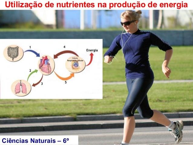 Utilização de nutrientes na produção de energiaCiências Naturais – 6º