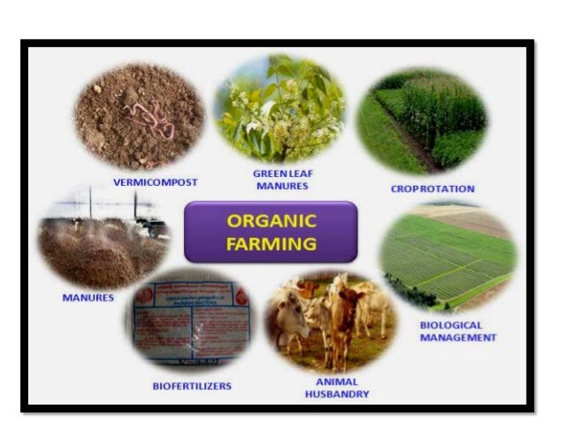 Organic Tea is Natural Hydroponic Nutrients for Gardening