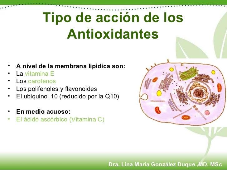 Tipo de acción de los Antioxidantes <ul><li>A nivel de la membrana lipídica son:   </li></ul><ul><li>La  vitamina E   </li...