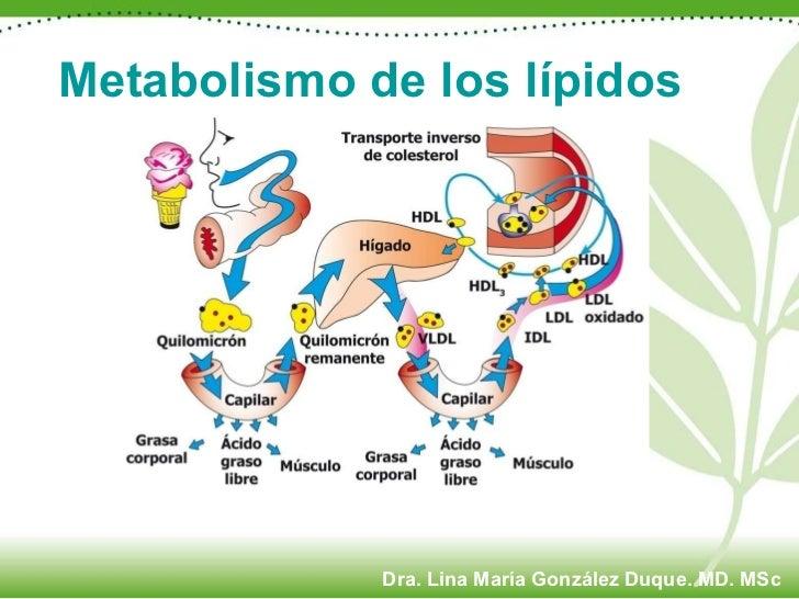 Metabolismo de los lípidos Dra. Lina María González Duque. MD. MSc