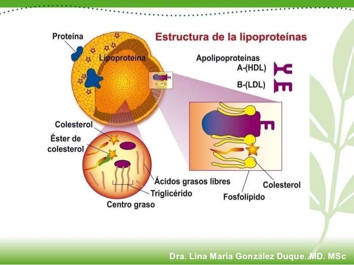 Dra. Lina María González Duque. MD. MSc