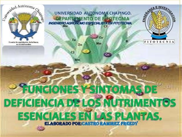 UNIVERSIDAD AUTONOMA CHAPINGO. DEPARTAMENTO DE FITOTECNIA INGENIERO AGRONOMO ESPECIALISTA EN FITOTECNIA. ELABORADO POR:CAS...