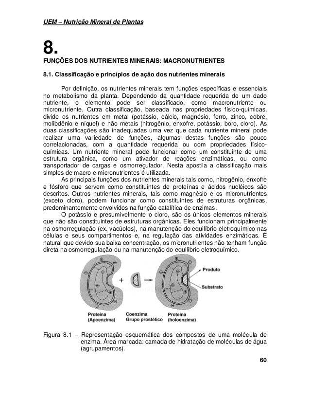 UEM – Nutrição Mineral de Plantas  60  8.  FUNÇÕES DOS NUTRIENTES MINERAIS: MACRONUTRIENTES  8.1. Classificação e princípi...