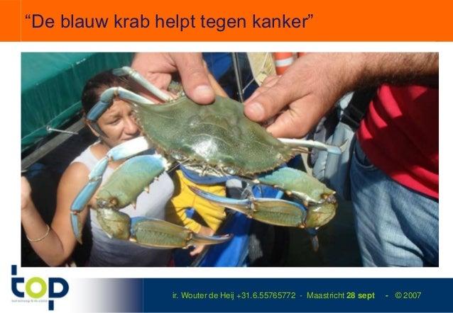 """""""De blauw krab helpt tegen kanker""""                 ir. Wouter de Heij +31.6.55765772 - Maastricht 28 sept   - © 2007"""