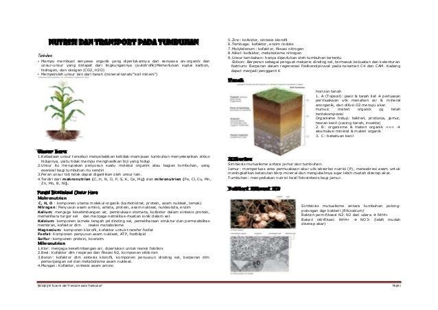 5.Zinc: kofaktor, sintesis klorofil        NUTRISI DAN TRANSPORT PADA TUMBUHAN                                            ...