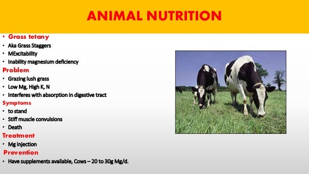 magnesium deficiency in ruminants The effect of minerals on the main diseases of dairy cows – review   the  availability is reduced by magnesium deficiency which causes a reduced.