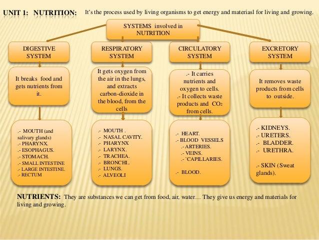 Nutrition diagram. english