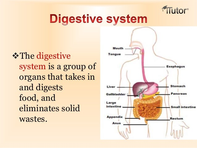 Nutrition & the Digestive System - Chapter Summary