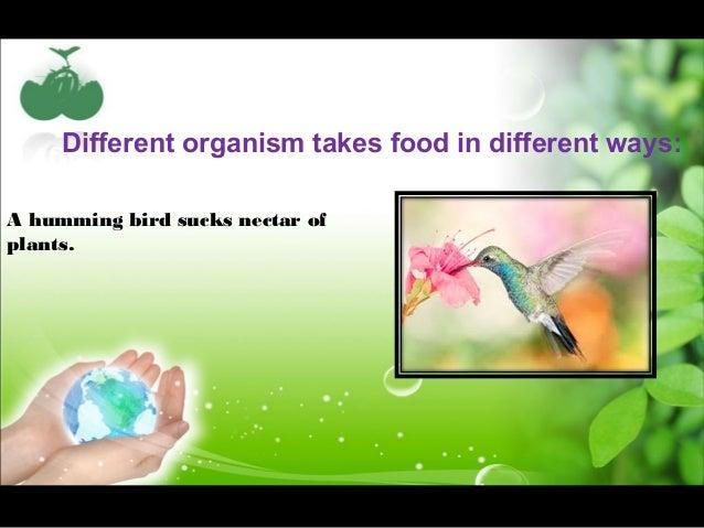Nutrition in animals class vii Slide 3