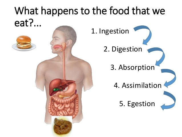 nutrition in humans, Human Body