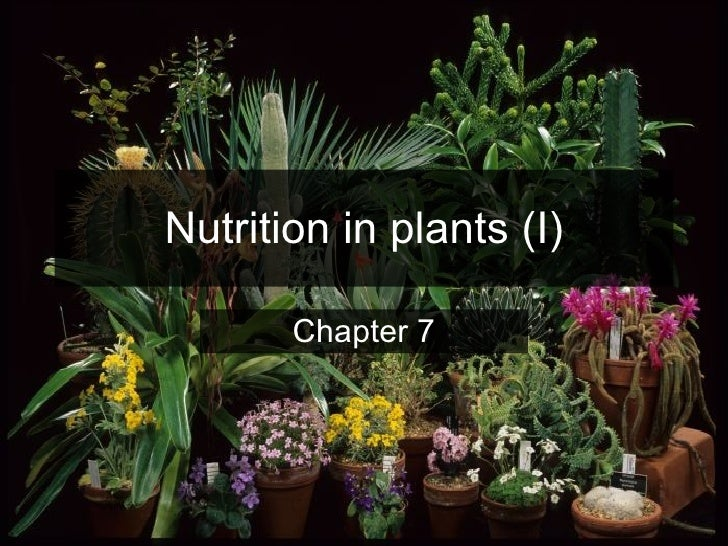 Nutrition in plants (I) Chapter 7
