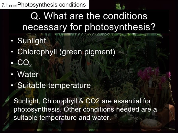 Q. What are the conditions necessary for photosynthesis? <ul><li>Sunlight </li></ul><ul><li>Chlorophyll (green pigment) </...