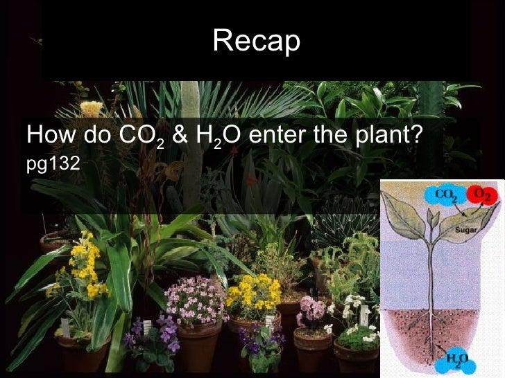 Recap How do CO 2  & H 2 O enter the plant?  pg132