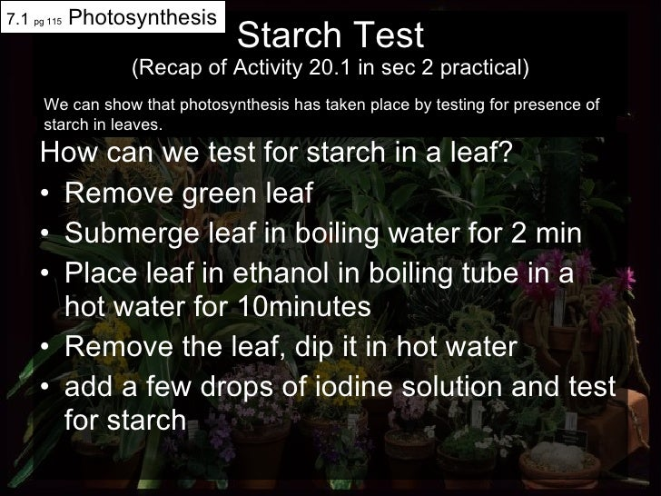 Starch Test (Recap of Activity 20.1 in sec 2 practical) <ul><li>How can we test for starch in a leaf? </li></ul><ul><li>Re...