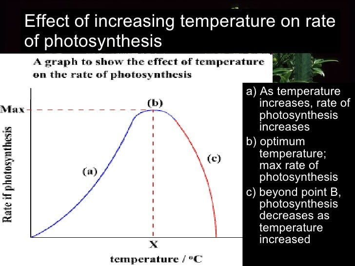Effect of increasing temperature on rate of photosynthesis <ul><li>a) As temperature increases, rate of photosynthesis inc...