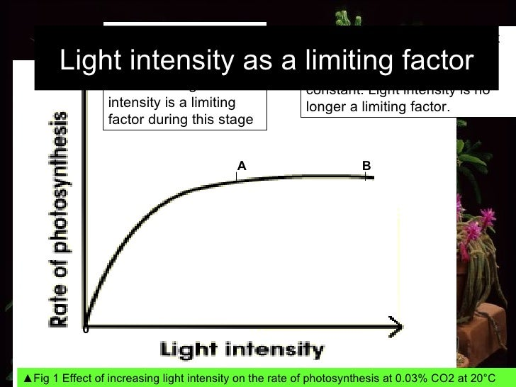 0 B ▲ Fig 1 Effect of increasing light intensity on the rate of photosynthesis at 0.03% CO2 at 20°C From A to B, even thou...
