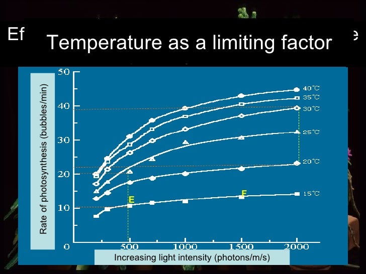 Effect of increasing temperature on the rate of photosynthesis  Increasing light intensity (photons/m/s) Rate of photosynt...